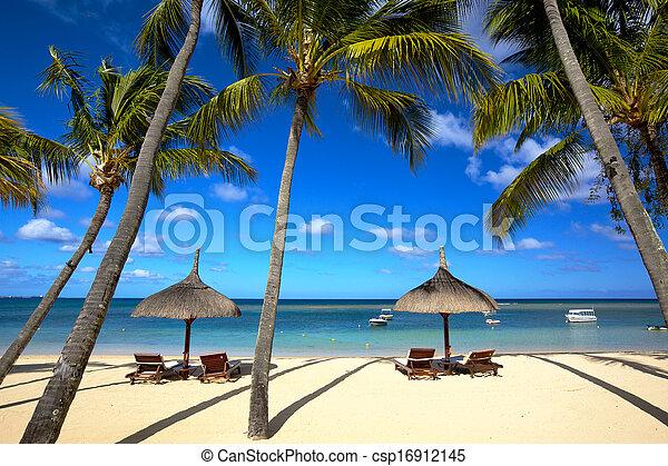 Playa tropical - csp16912145