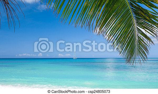 Playa tropical - csp24805073
