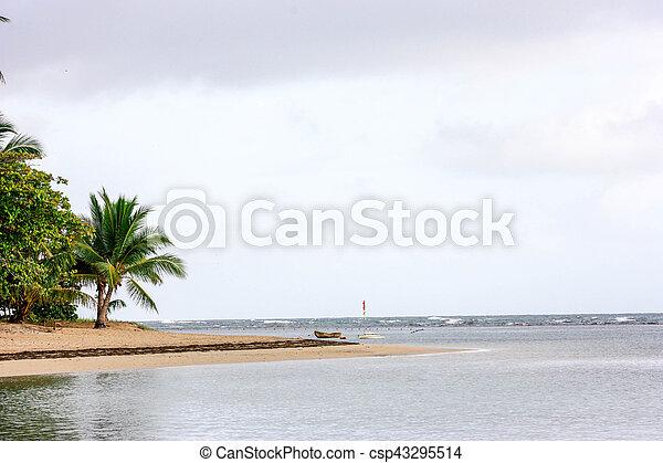 Playa tropical - csp43295514