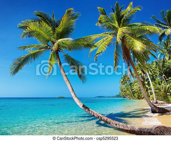Playa tropical, Tailandia - csp5295523