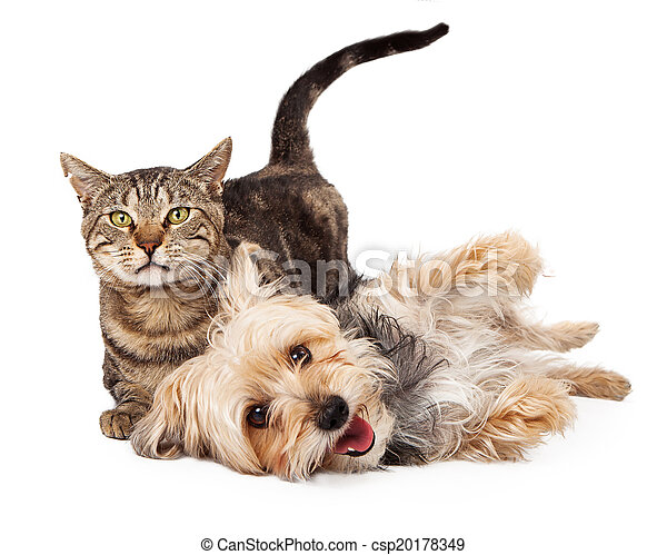 Playful Dog and Cat Laying Together - csp20178349