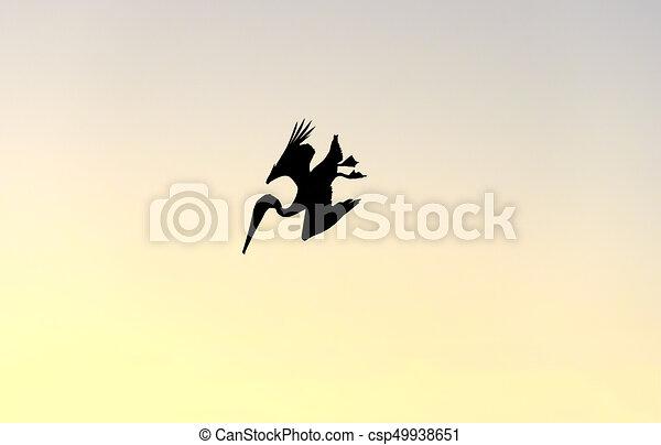 plongée, pélican, silhouette, oiseau, isolé - csp49938651