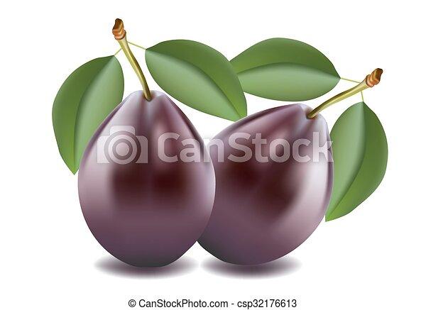plum - csp32176613