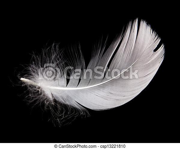 plume, cygne - csp13221810