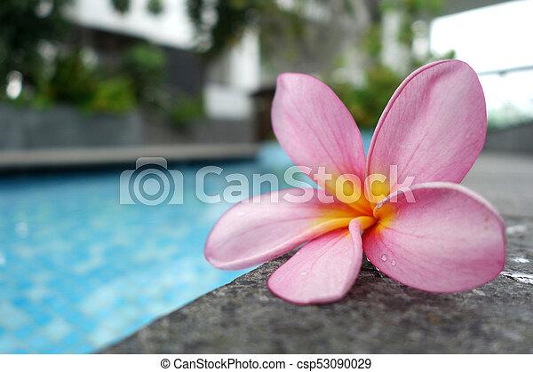 Perfect one pink plumeria flower on ceramic tile border of stock plumeria flower on ceramic tile border of swimming pool csp53090029 mightylinksfo Choice Image
