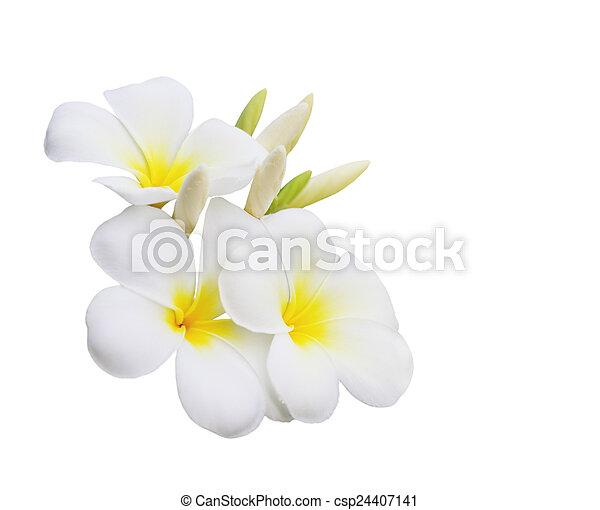 Plumeria Flower - csp24407141