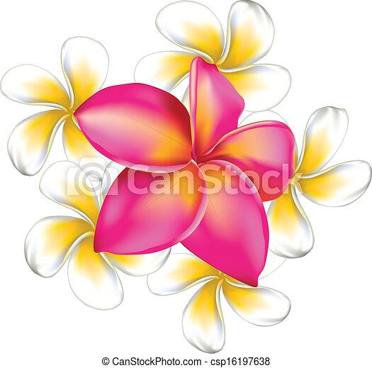 plumeria flowers frangipani plumeria big pink and small vectors rh canstockphoto ca plumeria flower clip art free plumeria flower clip art