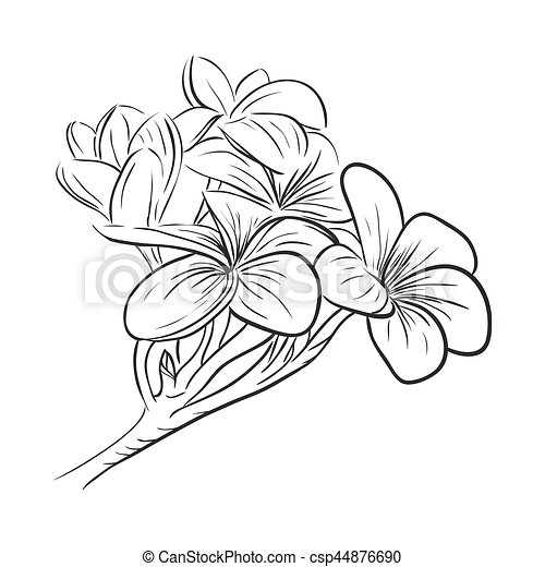 plumeria frangipani tropical flower icon also spanish tile pattern moroccan tiles as well cross sign design likewise hand drawn doodle arrow shapes additionally kit homes floorplans facades. on home plans and designs