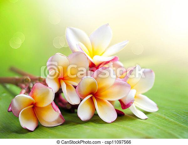 Flor de spa tropical Frangipani. Plumería - csp11097566