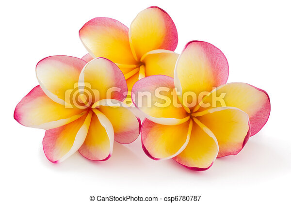 plumiera, 赤素馨花, frangipanni - csp6780787