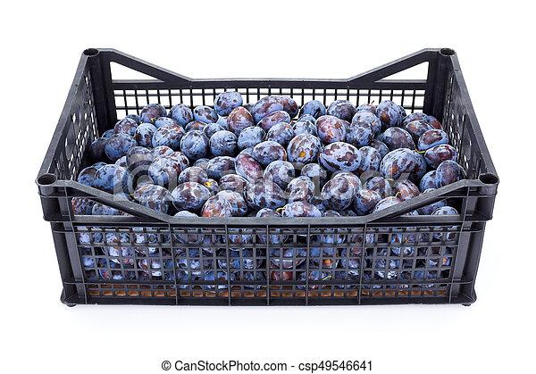 Plums (Prunus) in plastic crate - csp49546641