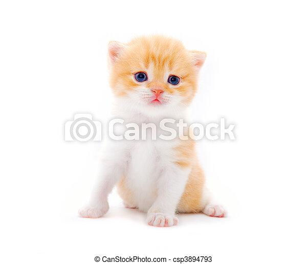 Pequeño gatito peludo en un fondo blanco - csp3894793