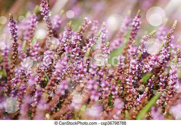Poco Fiori Viola Sfondo Verde Erba