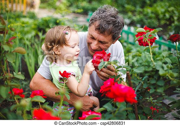 Una niña tocando la flor con el abuelo en el jardín de rosas ...