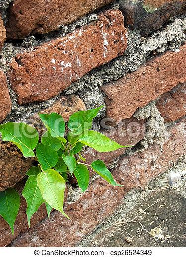 Pequeña planta - csp26524349