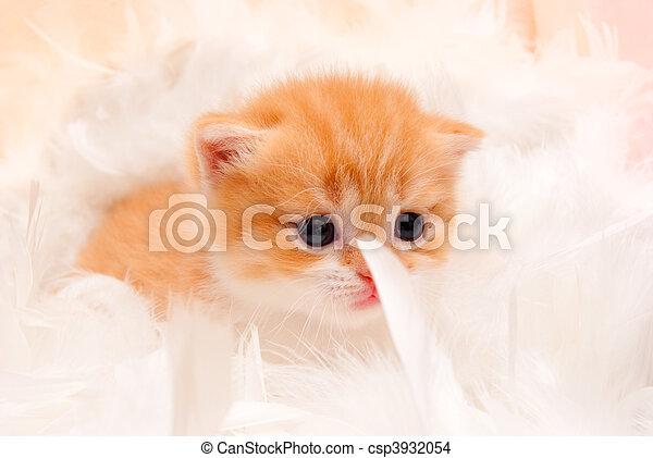 Pequeño gatito peludo con plumas suaves - csp3932054