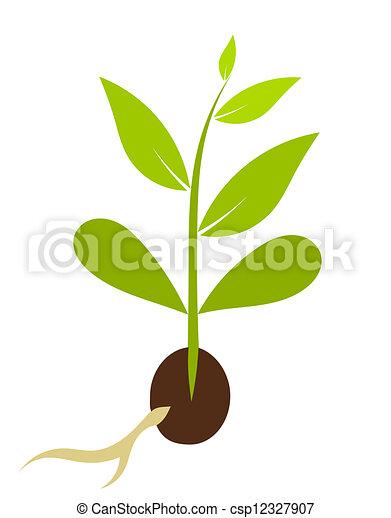La planta que crece de las semillas. Morfología vegetal. Ilustración del vector - csp12327907
