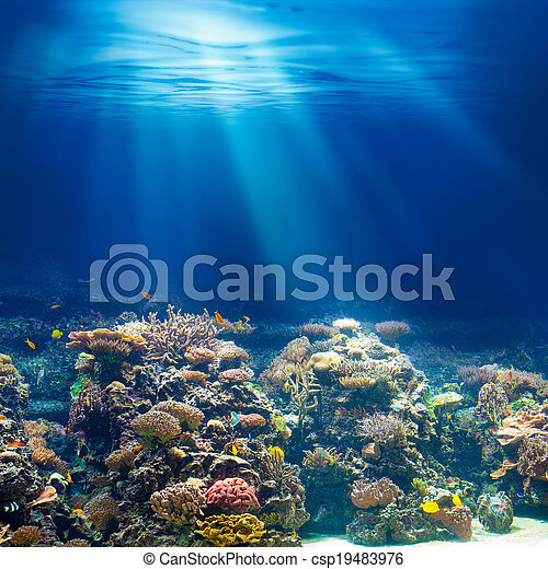 podwodny, tło, koral, ocean, snorkeling, rafa, nurkowanie, albo, morze - csp19483976