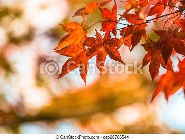 podzim, velmi, slabý ohnisko, list - csp28766544