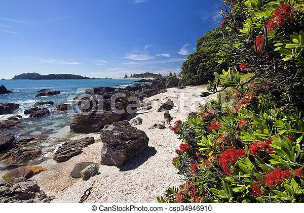 Maunganui beach mount Mount Maunganui:
