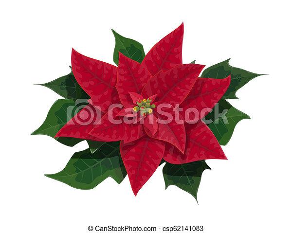 Christmas Leaves.Poinsettia Flower Of Christmas Holidays