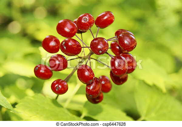 Pictures Of Poisonous Red Berries Beautiful But