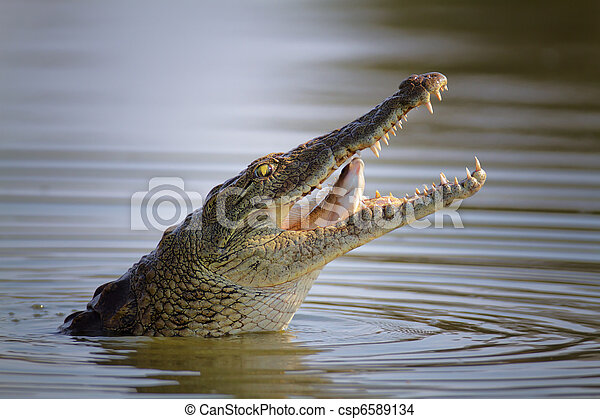 poisson crocodile, swollowing, nil - csp6589134