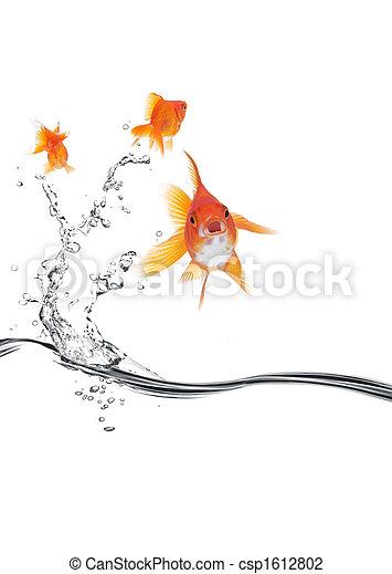 poisson rouge, loin, sauter - csp1612802