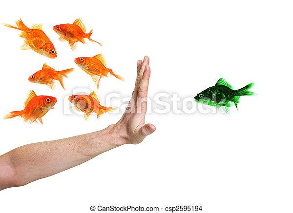 Poisson rouge main vert discriminating isol main for Tarif poisson rouge