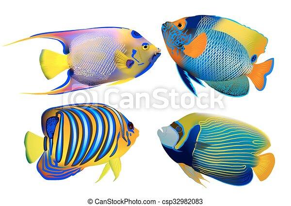 Poissons tropicaux blanc ensemble poissons tropicaux for Poisson tropicaux