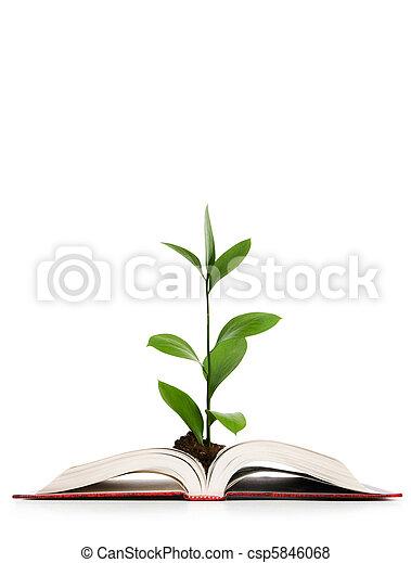 pojęcie, wiedza, liście, -, książka, rozwój, poza - csp5846068