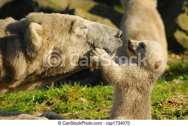 polar bear and cub - csp1734070