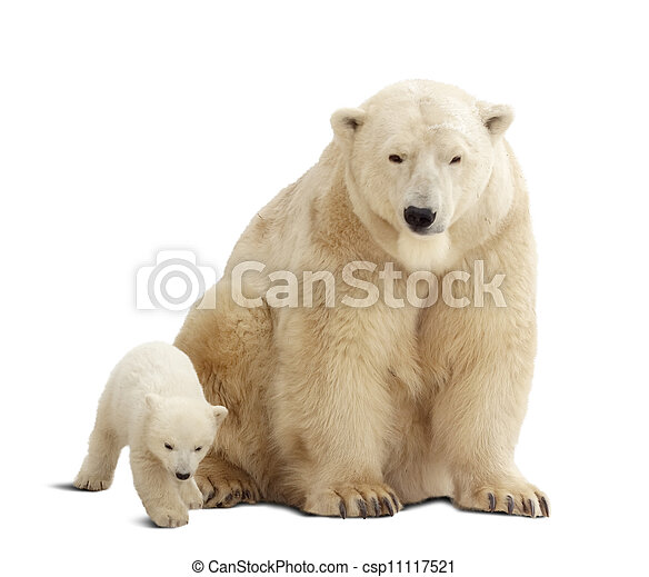 polar bear with baby. Isolated over white  - csp11117521