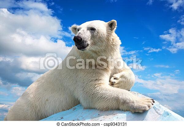 polar, himmelsgewölbe, bär, gegen - csp9343131