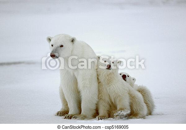 Polar she-bear with cubs. - csp5169005