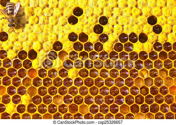 Abeja, miel, néctar y polen - csp25326657