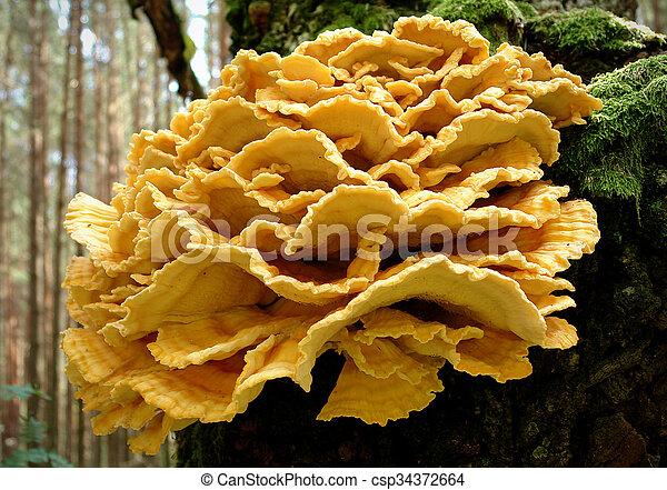 pollo, legnhe, funghi - csp34372664