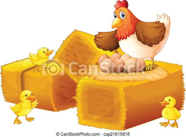 Una gallina con sus huevos y sus polluelos - csp21615818