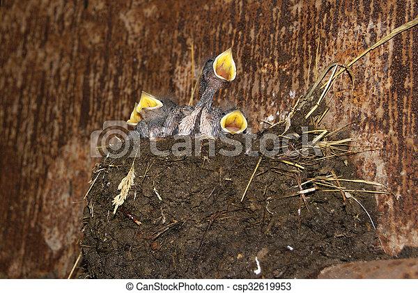 Traga chicas en el nido - csp32619953