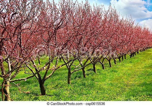 pomar fruta - csp0615536