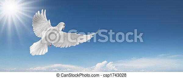 pomba, céu branco - csp1743028