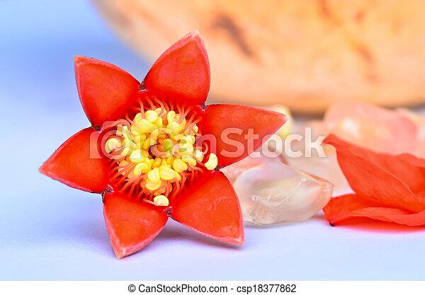 pomegranate flowers - csp18377862