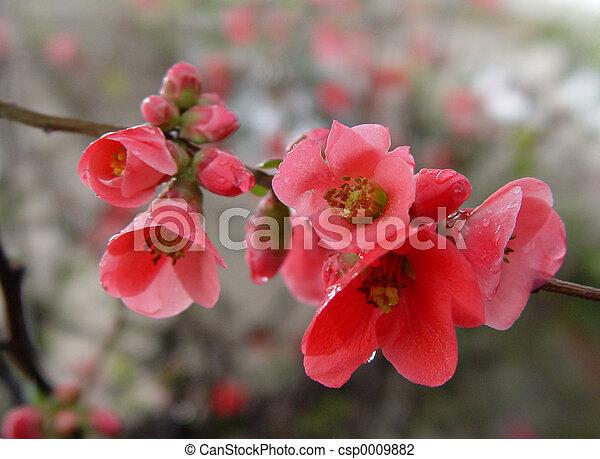 Pomegranate Flowers - csp0009882