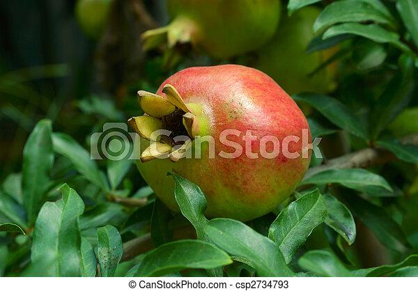Pomegranate fruit on the tree - csp2734793