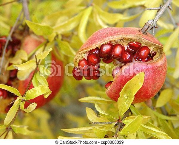 Pomegranate - csp0008039