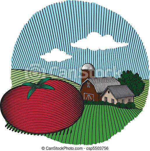 pomodoro, colorare, scena - csp5503756