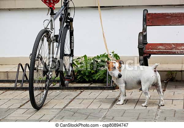 Pomorie, Bulgaria - May 01, 2020: Jack Russell Terrier Stands By The Bike And Waits For His Owner - csp80894747