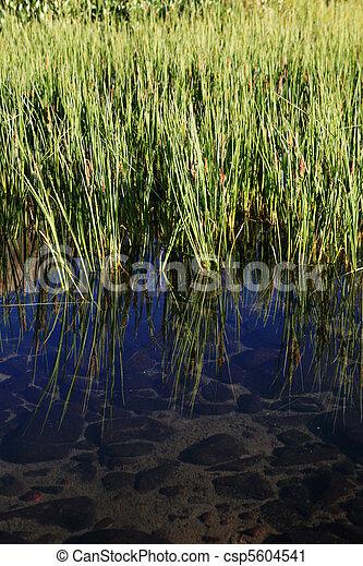 pond edge - csp5604541
