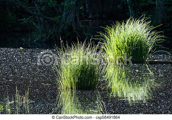 Pond with reflecting grass tufts - csp58491864