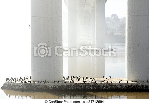 pont, dessous, matin, rivière, brumeux - csp34712694